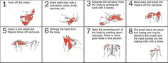 how to eat lobster - Google Search