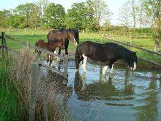 Build you track through a pond area