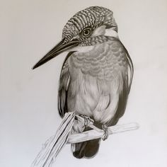 The second sketch of 2018 one of my favourite birds the common kingfisher. second sketch of 2018 one of my favo. Bird Pencil Drawing, Shading Drawing, Pencil Drawings Of Flowers, Pencil Shading, Pencil Art Drawings, Bird Drawings, Realistic Drawings, Animal Drawings, Drawing Sketches