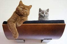 Cat Shelves by Cosy & Dozy