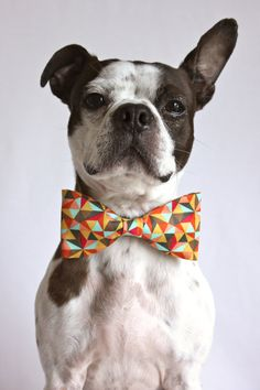 Retro Geometric Dog Bow-tie - Dog Accessories - Photo Prop. $12.25, via Etsy.