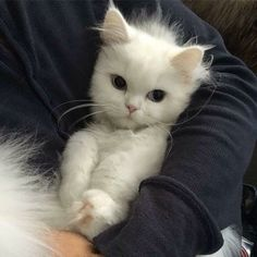 Hello there bright people. Are you or have you any - cats/kittens - Katzen Cute Baby Cats, Cute Baby Animals, Kittens Cutest, Cats And Kittens, Funny Animals, Ragdoll Kittens, Tabby Cats, Funny Kittens, Animals Images