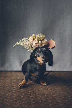 10 Adorable Hounds in Crowns #dachshund #weddingdog