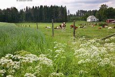 Suomen maaseutu (Finnish Countryside)