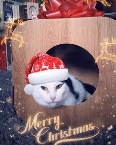 Merry Christmas Rupert!  you look so cute in there  thank you so much!  #cat #catsofinstagram #cats_of_instagram #catfurnature #catfurniture #catsinboxes #cattoy #INSTACAT_MEOWS #cutecat #PurrMachine #catsinboxes #catbox #Excellent_Cats #BestMeow #dailykittymail #thecatniptimes #catcube #catpod #ArchNemesis #FlyingArchNemesis #myindoorpaws #ififitsisits #cutecatcrew #catchalet #catnip #themeowdaily #kitty #dailykittymail #catgrass