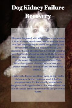 Canine Kidney Disease, Canine Kidney Failure, Getting great results in dogs with renal failure and renal disease. Kidney Failure Stages, Signs Of Kidney Failure, Kidney Failure Symptoms, Kidney Recipes, Dog Food Recipes, Renal Dog Food, Kidney Diet For Dogs