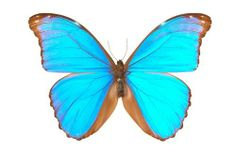 Butterflies Butterfly Clip Art, Butterfly Images, Orange Butterfly, Butterfly Gifts, Butterfly Wallpaper, Butterfly Cards, Free Frames, Box Frames, Photo Blue