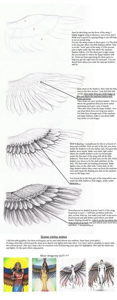 How to Draw Wings by MyWorld1 by MyWorld1.deviantart.com on @deviantART