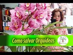 Como salvar uma Orquídea no vaso - YouTube