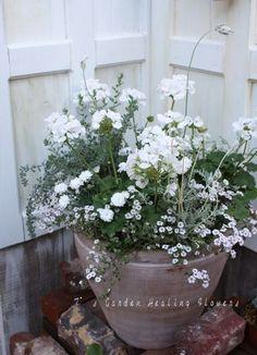 T's Garden Healing Flowers‐白の寄せ植え大鉢 Container Flowers, Container Plants, Container Gardening, Tall Outdoor Planters, Garden Planters, Pretty Flowers, White Flowers, Scandinavian Garden, Pot Jardin