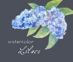Clipart numérique aquarelles fleurs aquarelle par SwiejkoForPrint