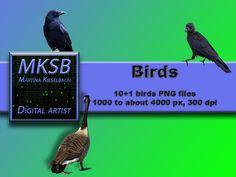 Ich freue mich, euch einen meiner jüngsten Neuzugänge in meinem #etsy-Shop vorzustellen: 11 bereits freigestellte, unterschlidliche Vögel. #Birds, #Overlays, #Photoshop, #Digitale_Downloads, #Instant_Download, #Fotografie, #Fotobearbeitung, #png, #Freistellungen,#png_Dateien #materialwerkzeug #schreibwarenkartenherstellung #weihnachten #weiss #overlays #photoshop #pngdateien http://etsy.me/2jBHYrl