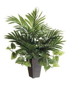 """This 21.5"""" Potted Areca Palm is perfect! #zulilyfinds"""