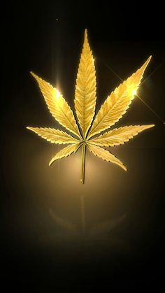 Weed leaves wallpaper from Weed Wallpapers app by