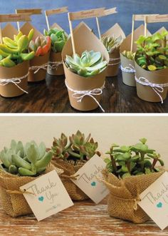 Suculentas souvenirs con vida propia Suculentas souvenirs con vida propia olga l. Wedding Favours, Wedding Gifts, Wedding Ideas, Deco Cactus, Succulent Favors, Bridal Shower, Baby Shower, Ideas Para Fiestas, Succulents Garden