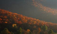 Pine Creek Trail: Glowing trees and shadowy slopes by GaliWalker, via Flickr