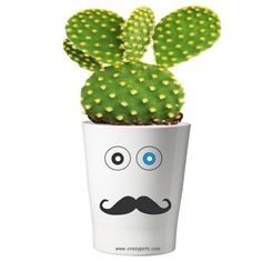 101  Pflanzentopf ohne Pflanze Planter Pots, Mugs, Tableware, Gifts For Ladies, Guy Presents, Gifts For Birthday, Gift For Boyfriend, Plants, Dinnerware