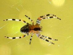 '411 - Spider in the sun ' von Elke Seifried bei artflakes.com als Poster oder…