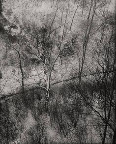 Josef Sudek, Still life, 1956