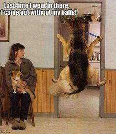 Beim Tierarzt...