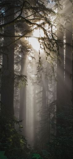 foggy weather with trees iPhone 11 Wallpapers
