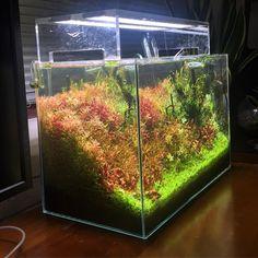 400 отметок «Нравится», 12 комментариев — @shrimpery в Instagram: «#natureaquarium #plantedaquarium #aquascaping #aquascape #aquarium #fishtank #plantedtank»