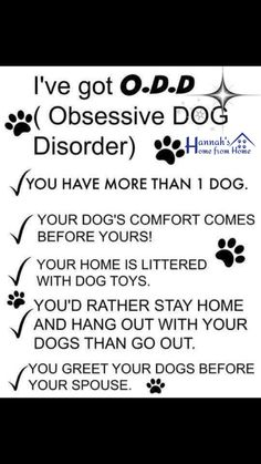 #dog #petsitter #dogsitter #doggydaycare #HHFH #northampton #petsitter