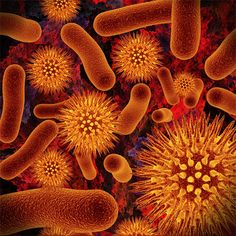 The Good-For-You Bacteria Probiotics: The Good-For-You Bacteria; boost your immunity, aid your digestion, help alleviate allergies and moreProbiotics: The Good-For-You Bacteria; boost your immunity, aid your digestion, help alleviate allergies and