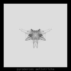 pyroderces aellotrichia .insecta collection #generativeart made with #processing.