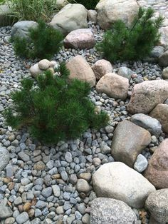 Rock Garden www. Patio Garden, Cottage Garden, Deck Garden, Small Gardens, Japanese Garden, Outdoor Gardens, Rock Garden Landscaping, Garden Paving, Garden Pool