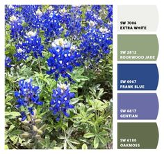 Michele A. used the Snap It button by Sherwin-Williams to capture local color. Her inspiration was these lovely, blue flowers.