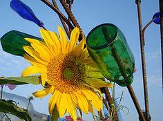 flowers around my bottle tree