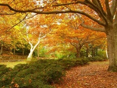 Everglades Garden, Leura NSW in Autumn...bliss  Google Image Result for http://www.weekendnotes.com/images/the-everglades-garden3.jpg