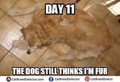 Find the stunning dog and cat memes funny clean - hilarious pets Funny Songs, Funny Car Memes, Funny Animal Memes, Funny Cat Videos, Funny Cat Pictures, Dog Memes, Funny Animals, Cute Animals, Memes Humor