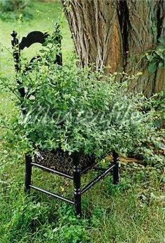 ladder back black chair planter from masterfile