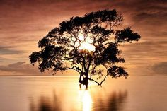 Sunlit tree in the water