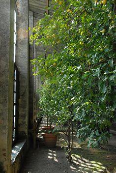 Limonaia wurde in Italien, Torri del Benaco aufgenommen und hat folgende Stichwörter: Museum,  Italien,  Gardasee.