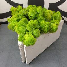doniczka trójkątna z mchem Broccoli, Vegetables, Food, Meal, Eten, Vegetable Recipes, Meals, Veggies