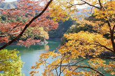 Okutama Ropeway #奥多摩 #紅葉 #Okutama #Autumn