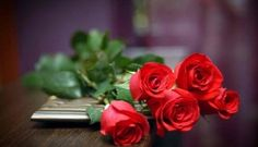 Red Rose Flower Love Red Rose Desktop The post Hd Flower Wallpaper Rose appeared first on Share Online Rose Flower Hd, Rose Flower Pictures, 3d Rose, Rose Photos, Hd Flowers, Flowers Nature, Rose Day Wallpaper, Red Flower Wallpaper, Hd Wallpaper