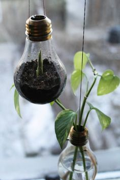 hanging lightbulb garden - How fun would it be to make these and hang from the tree branches in our yard!? As long as they didn't break...