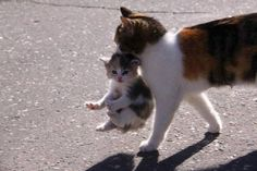 Momma cat and baby calico