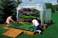 8 Reasons Why You Need A Greenhouse