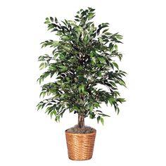 4' Green Smilax Bush