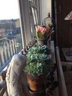 The window in januar