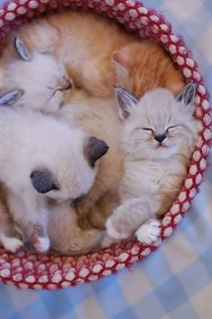 what cute cats!