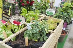 Vegetables growing in greenhouse, Augsburg, Bavaria, Germany Fruit Garden, Terrace Garden, Edible Garden, Vegetable Garden, Garden Plants, Growing Herbs, Growing Vegetables, Succulent Gardening, Container Gardening