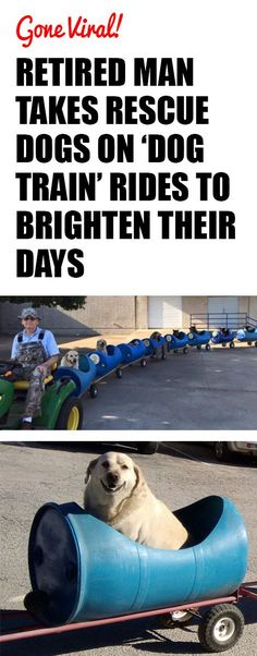 Retired Man Takes Rescue Dogs On 'Dog Train' Rides To Brighten Their Days I Love Dogs, Puppy Love, Cute Dogs, Rescue Dogs, Animal Rescue, Funny Animals, Cute Animals, Funny Pets, Train Rides