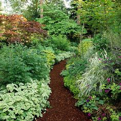 Shade Garden: Pick Interesting Materials.   Look past the plants and consider making hardscape elements the focal point of your shade garden. For example, a path mulched with dark wood chips becomes a stunning focal point when surrounded by white-variegated bishop's weed, ornamental grasses, or golden groundcovers.