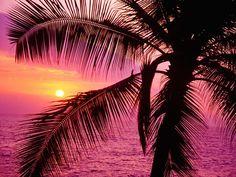 pink sunset!!!